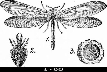 . A manual of zoology. Zoology. IV. INSECTA: HEXAPODA