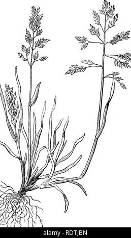 . Handbook of grasses, treating of their structure