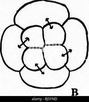 . A textbook of invertebrate morphology [microform