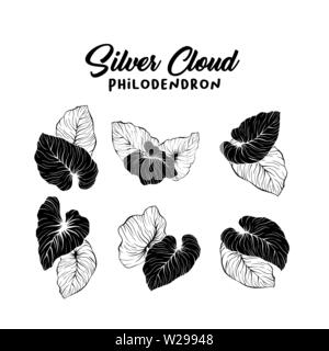 Vector silhouettes of tropical leaves. Monstera, coconut