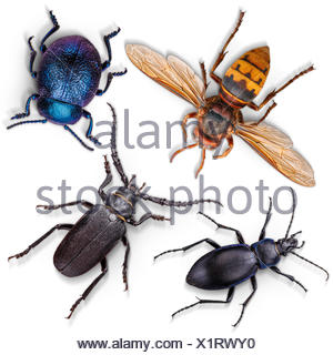 insects set white background