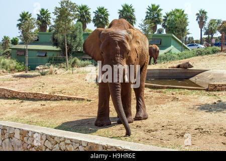 L'Italia. Puglia. Fasano. Zoo safari Fasanolandia. rinoceronte Foto stock - Alamy