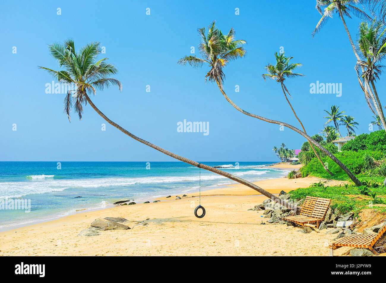 swing chair sri lanka covers keighley tree on palm beach stock photos and