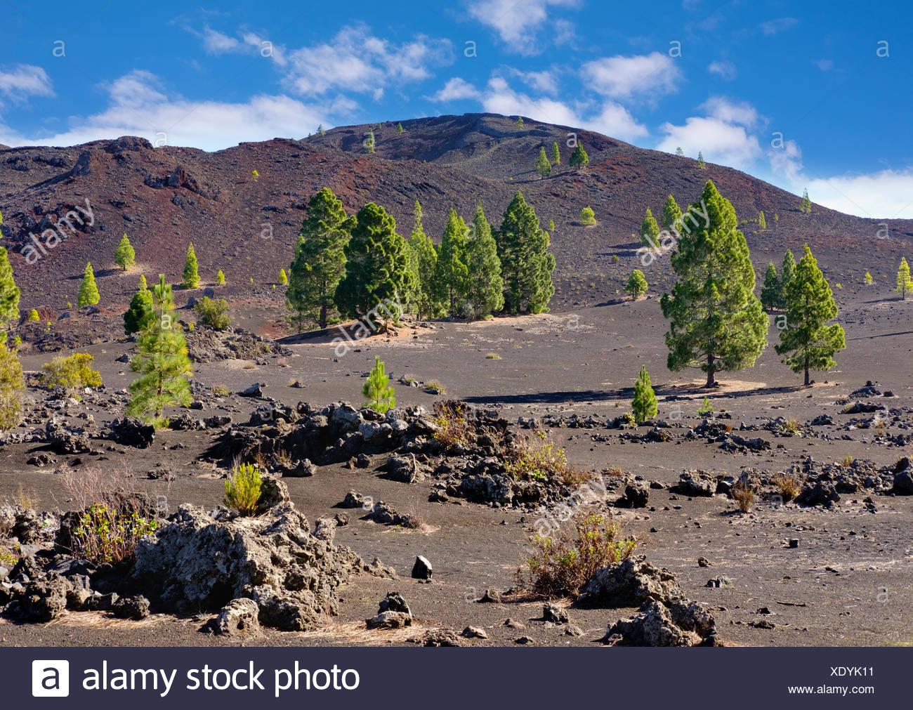7pines teneriffa att uverse login montana negra stock photos and images