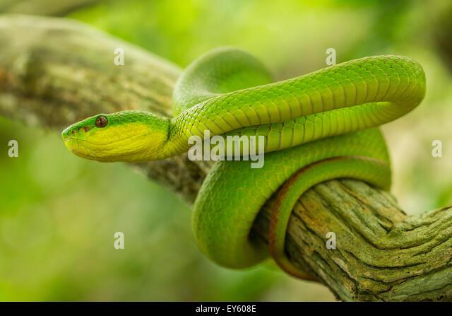 Biosphoto Stock Photos & Images, Biosphoto Stock ...