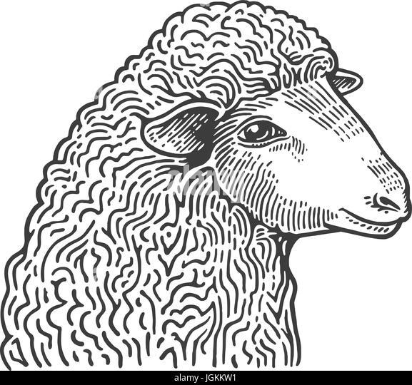 Pig Illustration Drawing Engraving Line Art Realistic