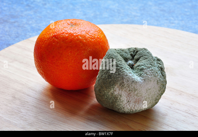 Rotting Food Stock Photos & Rotting Food Stock Images
