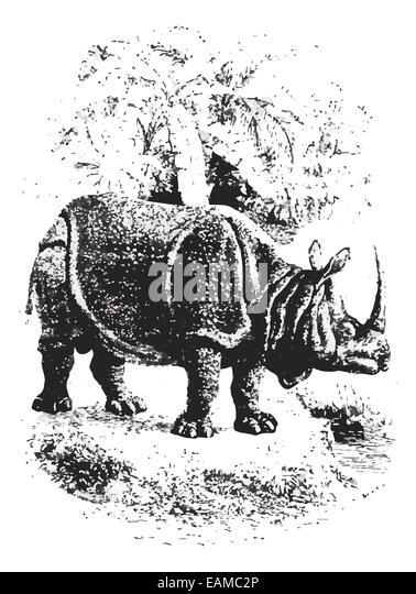 Rhinoceros Artwork Stock Photos & Rhinoceros Artwork Stock