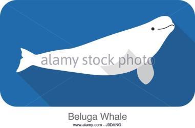 whale beluga cartoon swimming icon flat vector illustration water drawing alamy cute