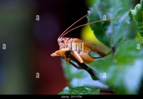 Bug Like Stock Photos Bug Like Stock Images Alamy