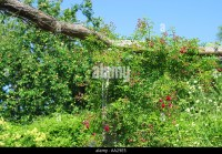 Rose Pergola In Garden Stock Photos & Rose Pergola In ...
