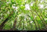 Rainforest Tree Canopy South America Stock Photos ...