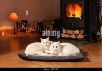 Cat Domestic Animal Fireplace Stock Photos & Cat Domestic ...