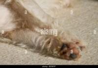 Dog Sleeping Carpet Stock Photos & Dog Sleeping Carpet ...