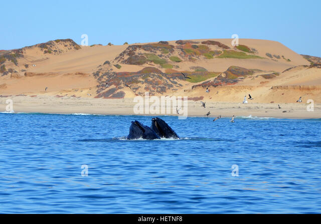 kelp forest diagram cardiac muscle labeled whale watch california stock photos & images - alamy
