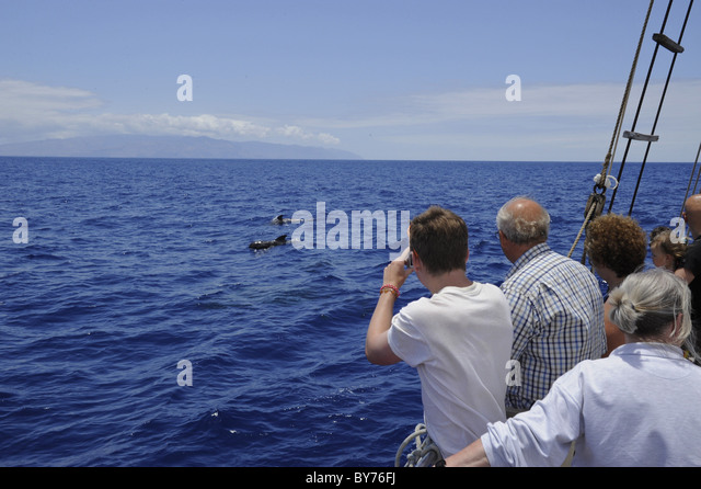 Group People Whale Watching From Stock Photos Amp Group