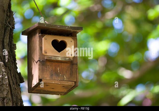 Robin Bird Houses Outside