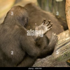 Heredity Family Tree Diagram Star Delta Wiring Plc Offspring Genes Stock Photos & Images - Alamy