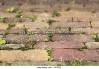 Weeds In Paving Stock Photos & Weeds In Paving Stock