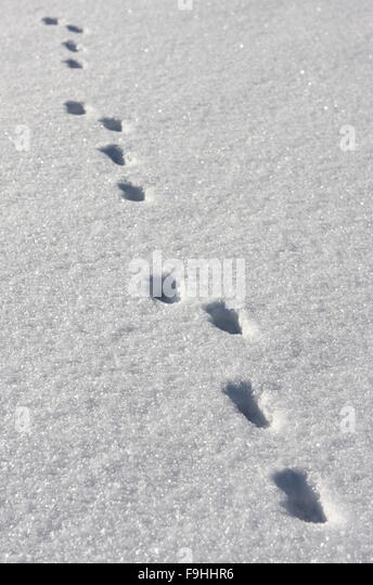 Snow Footsteps Stock Photos & Snow Footsteps Stock Images