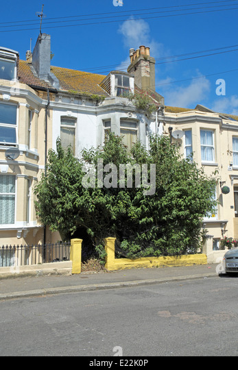 Image result for tree covering house address