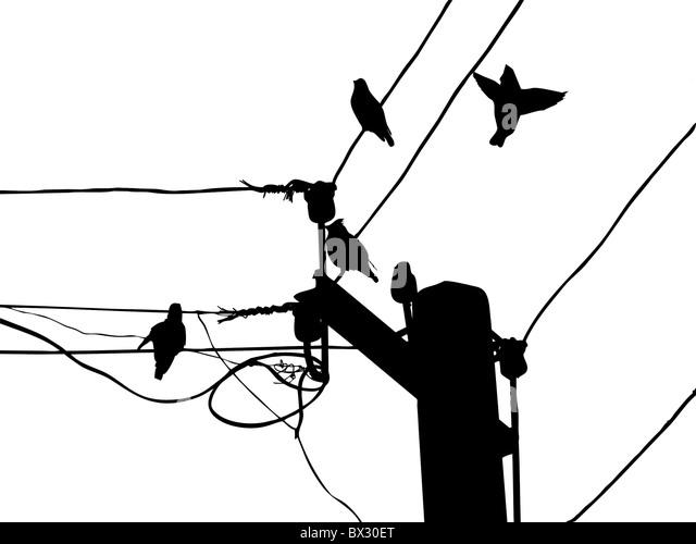 Clip Art And Illustration Birds Stock Photos & Clip Art
