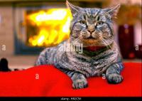 Fireplace Christmas Cat Stock Photos & Fireplace Christmas ...