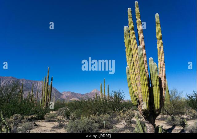 Mexico Desert Landscape Cactus Stock Photos  Mexico