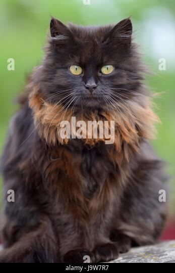 munchkin high chair hanging nest brown and black striped cat stock photos & images - alamy