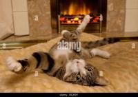 Cat Indoors Fireplace Stock Photos & Cat Indoors Fireplace ...
