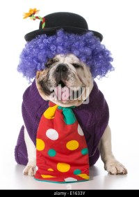 Silly Dog And Costume Stock Photos & Silly Dog And Costume ...