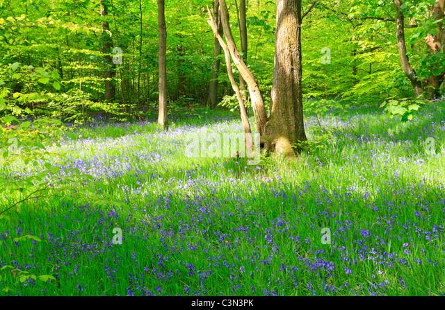Wyke Stock Photos  Wyke Stock Images  Alamy