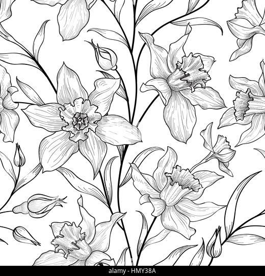 Illustration Plant Valerian Valeriana Officinalis Stock