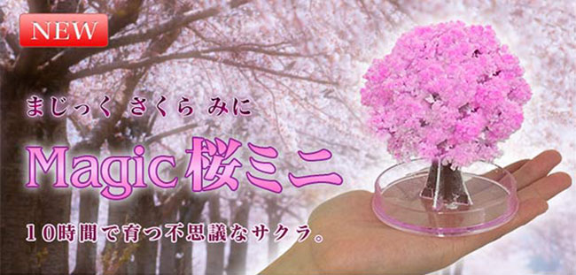 Magic Sakura Tree Cherry Blossom Chia Pet for otaku