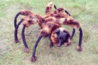 Giant spider prank goes viral on the web - L7 World