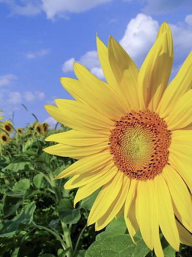 soleil et carence en vitamine D