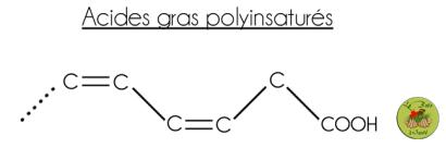acide gras polyinsaturé