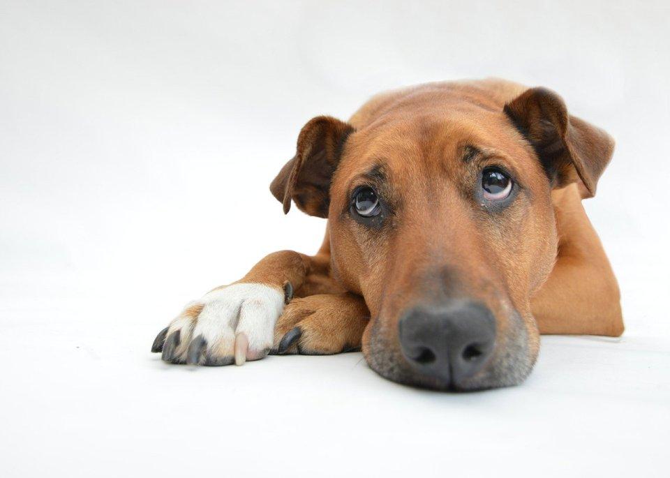 animaux - huiles essentielles - chiens