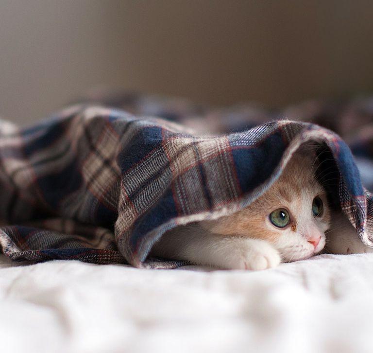 Ne sois pas timide, petit chat