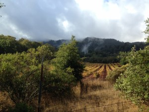 Visiting Sonoma – A Day at Jack London State Historic Park