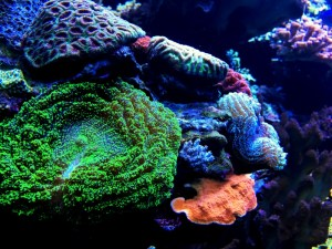 Earth Focus: Vanishing Coral Comes to KCET