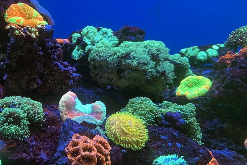 Coral Reefs Aquarium of the Pacific