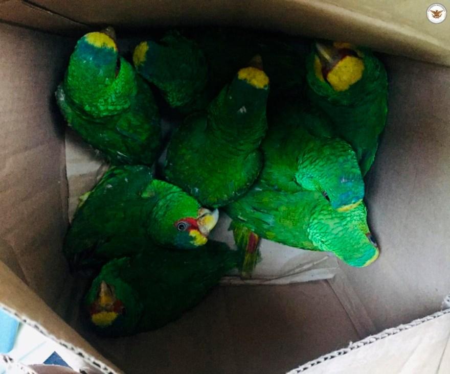 animales exoticos trafico, trafico de animales