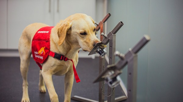 Foto de un perro en el estudio que afirma que detecta nel codi
