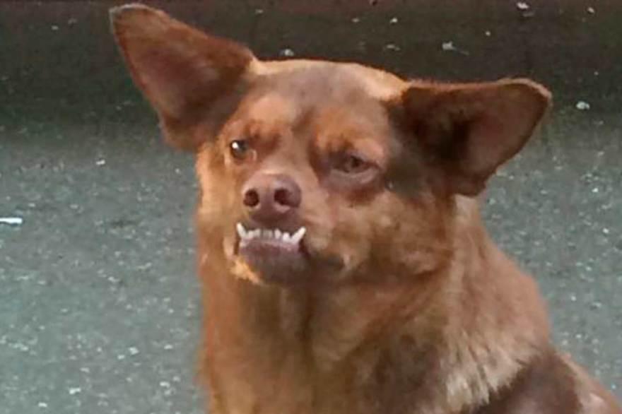 Hoy es el Día del Perro Chilaquil
