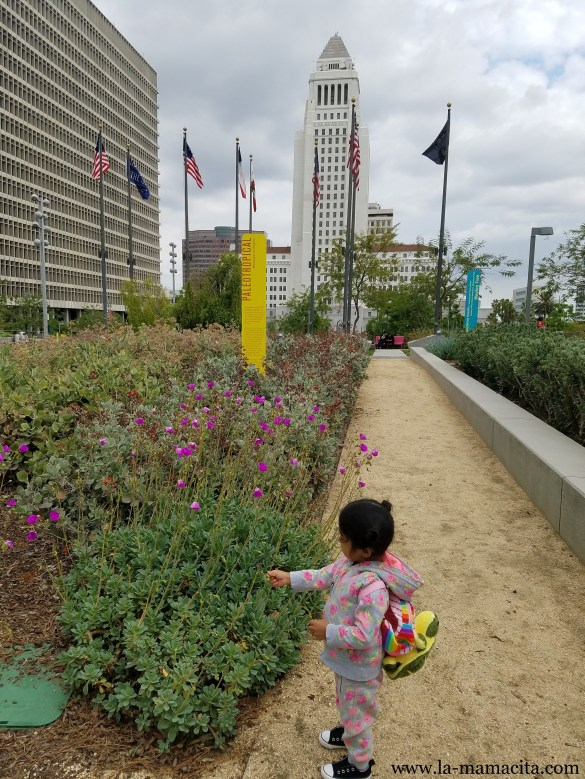 City Hall Garden