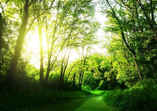 Sentier dans un sous-bois éclairé à travers les arbres