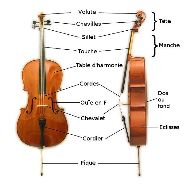 Violoncelle anatomie wikimedia