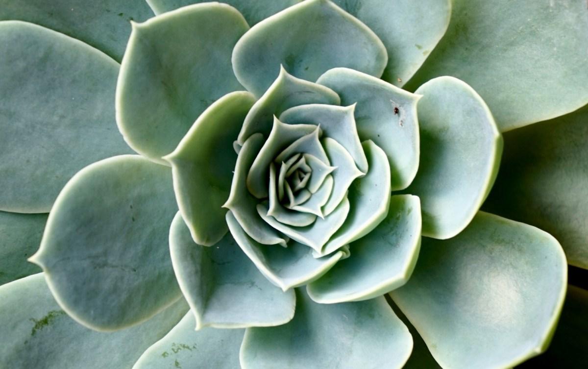 Le geometrie delle piante e la successione di Fibonacci