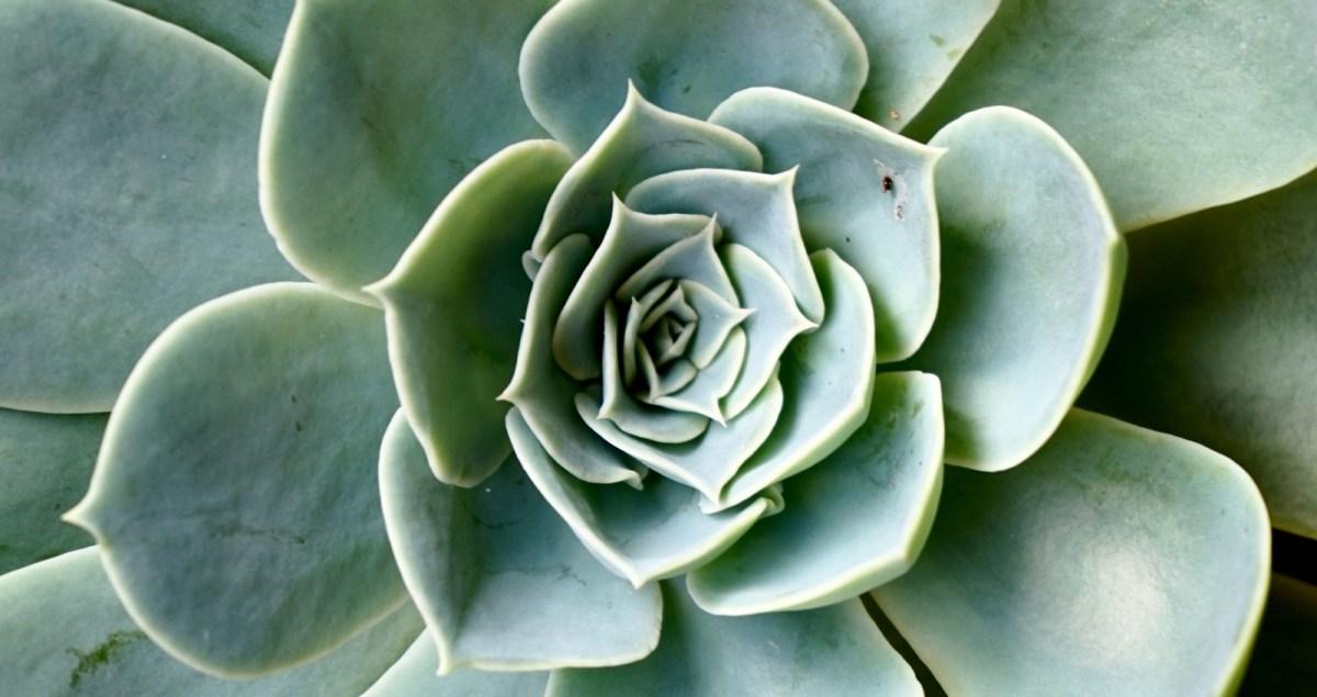 Geometria piante fibonacci